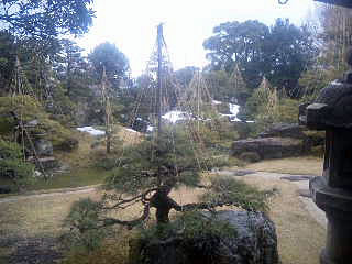 Dr.ミーヤンの下手っぴい釣りブログ-日本庭園