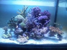 $♪天空の珊瑚礁♪ を目指して
