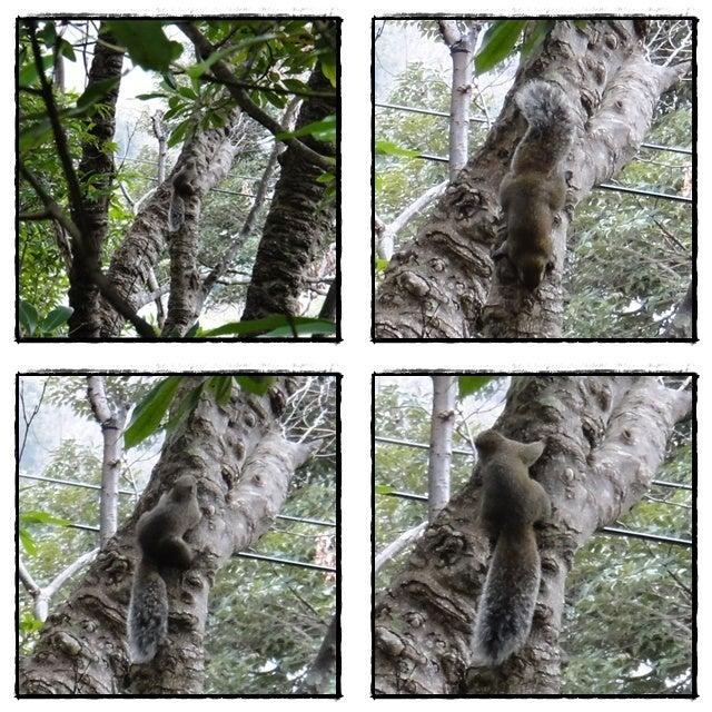 旅犬Lani&Leaのほほん風船記-リスの庭