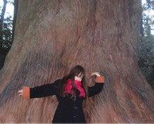 MOKA☆ブログ-神宮の樹