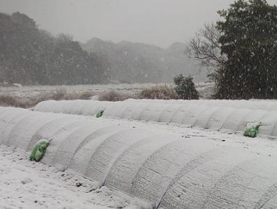 農業のトータルコーディネータ  イノウエ農商事のブログ-02293