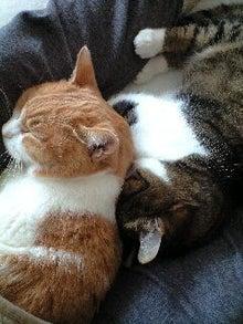 ずれずれブログ…湘南で猫と暮らせば…-120229_1307~0001.jpg