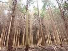 $きらめ樹大和高原の会ブログ