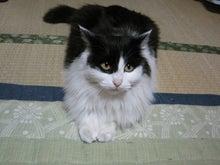 $のんちゃんのブヒブヒブログ