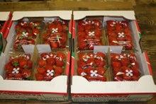 九州産 長崎産 鈴田峠農園 安心安全の直売所 米、野菜、豚肉、卵、鶏肉、牛肉、海産物、産地直送、通販、大村市 野鳥の森レストラン-地方発送用のイチゴ