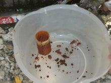 赤水対策のブログ