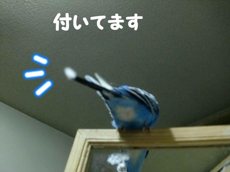 ***れんちゃんnote*** -あっ!こんなところに!!