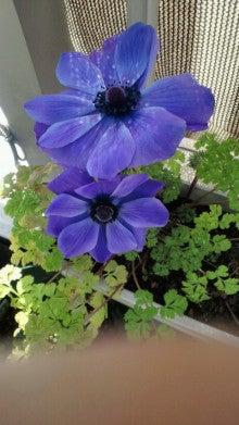 凛と空に咲く-2012030611340001.jpg