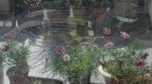 凛と空に咲く-2012030611440000.jpg