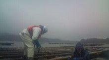 学生ボランティアによる筏作り