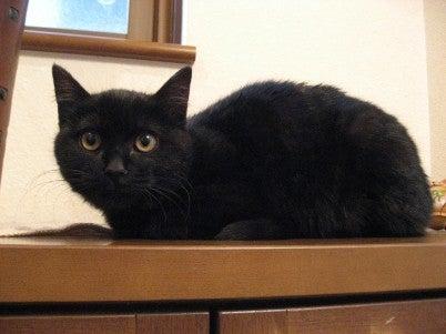 $◆◆◆ ka-chanのブログ ◆◆◆「どえりゃあ猫が好きだがね」