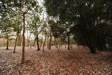 緑地公園5