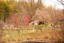 緑地公園8