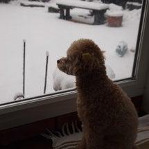 モカの雪遊び♪