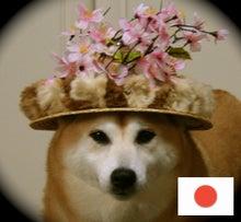 $ノブと伽羅の楽しみな毎日(*^。^*)-桃源郷@伽羅さん