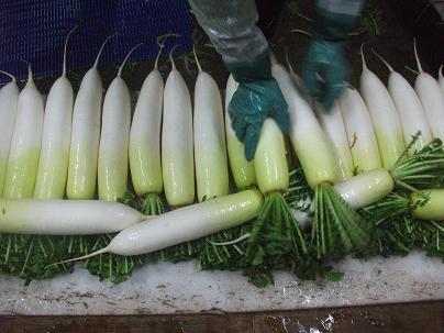 農業のトータルコーディネータ  イノウエ農商事のブログ-03095