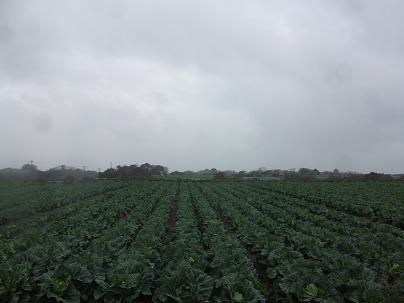 農業のトータルコーディネータ  イノウエ農商事のブログ-03091