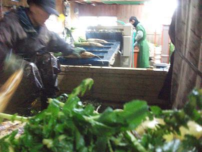 農業のトータルコーディネータ  イノウエ農商事のブログ-03093