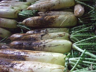農業のトータルコーディネータ  イノウエ農商事のブログ-03092