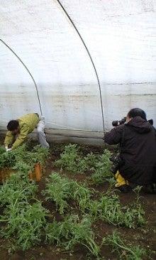 川田農園 ブログ-120309_0840~0001.jpg