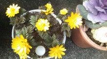 カーリフレッシュ March(マーチ)  -おっさんの楽しみ 素人園芸7