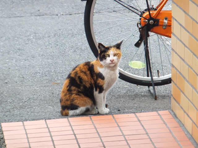 にゃほのラーメン日記(仮)-猫ちゃん