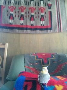 オカメインコのももちゃんと花教室と旅日記-120312_085630.jpg