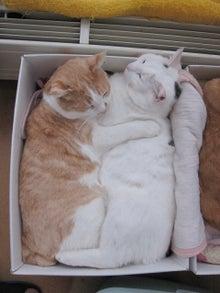 気がつけば、猫がいっぱい