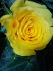 ちよみのブログ-201203041750.jpg