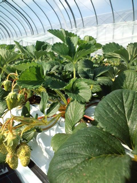 滋賀で農業☆!「市川農場」Blog
