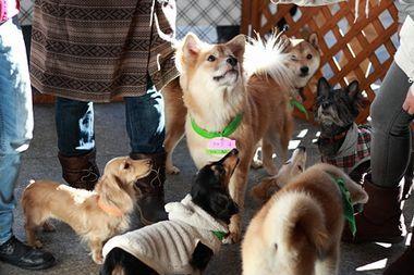 ~HWJ~ 全国の犬猫譲渡・里親会・しつけ情報