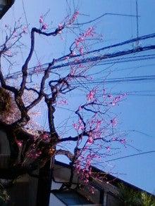 コミュニティ・ベーカリー                          風のすみかな日々-紅梅2