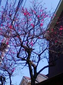 コミュニティ・ベーカリー                          風のすみかな日々-紅梅