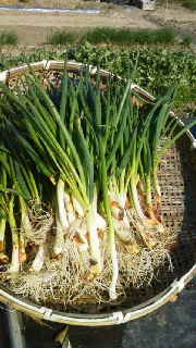 農園長のブログ-2012031415060000.jpg