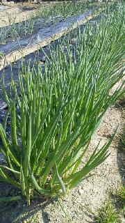 農園長のブログ-2012031414530000.jpg