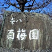 安八百梅園-梅並木、…