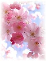 $◇アロマニアニマル◇-香りのある暮らしと愉快な動物達に癒やされる日々-