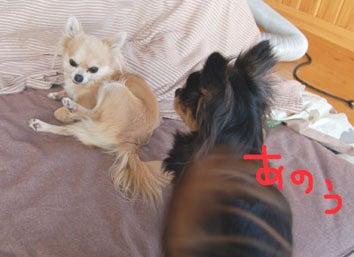 子犬のお部屋 長野県ブリーダー