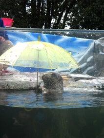 ALL OK!でしょ-傘もち