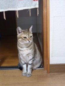 two nyan life☆-120321_221333.jpg