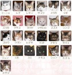 $美猫の館♪