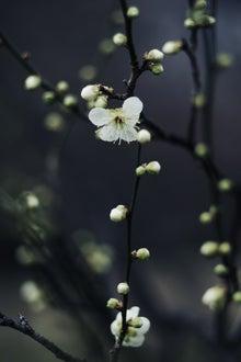 ざ・まつりや日記~美髪・美肌・美心のブログ