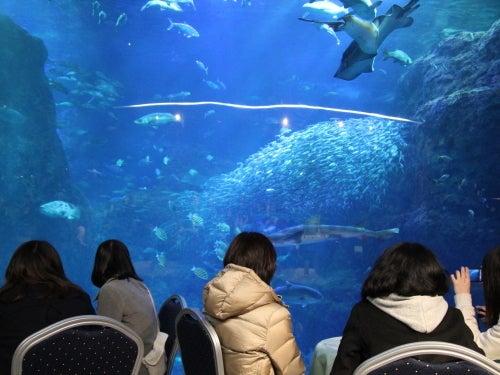 むーさんブログ-えのすい大水槽の前で食事