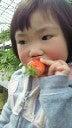 我が家  たぬき村-201203251224000.jpg