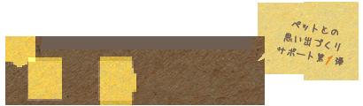 浦安の猫専門ペットシッター【キャットシッターME】舞浜・新浦安・京葉線 市川市・船橋市・習志野市・千葉市美浜区 ねこの留守番サービス-ispot