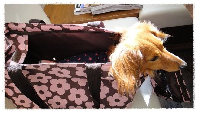 旅犬Lani&Leaのほほん風船記-ポルトメゾンルームス