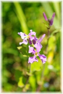 毎日はっぴぃ気分☆-紫花菜