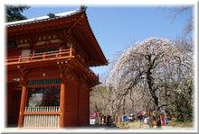 毎日はっぴぃ気分☆-赤門と枝垂れ梅