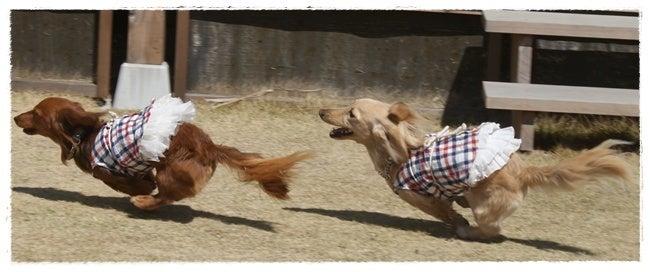 旅犬Lani&Leaのほほん風船記-ドッグラン