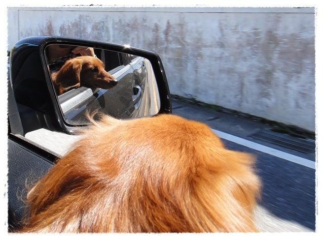 旅犬Lani&Leaのほほん風船記-気分は❤Beach Boys